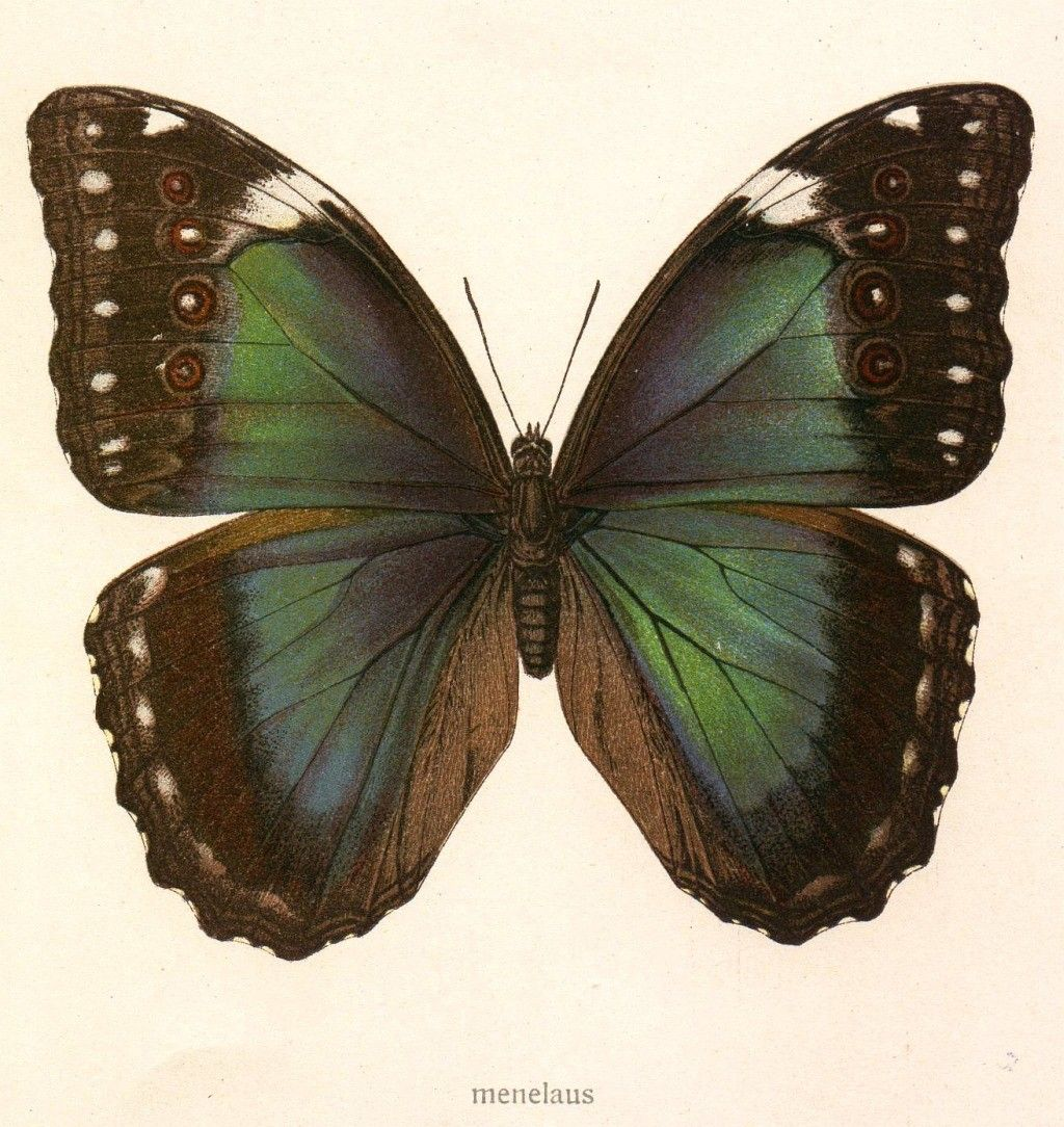 butterfly tumblr - Buscar con Google
