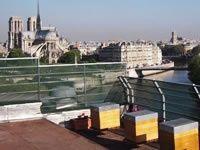 """Concours """"Récolte du miel à la Tour d'Argent""""  15 Quai de la Tournelle 75005 Paris  Métro Sully-Morland"""