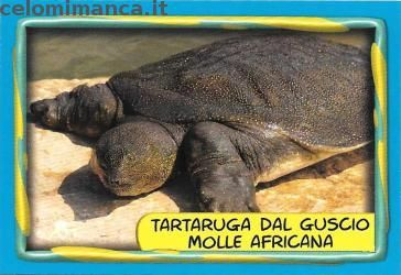 Tartaruga Dal Guscio Molle.Amici Cucciolotti 2016 Fronte Figurina N 188 Tartaruga Dal Guscio