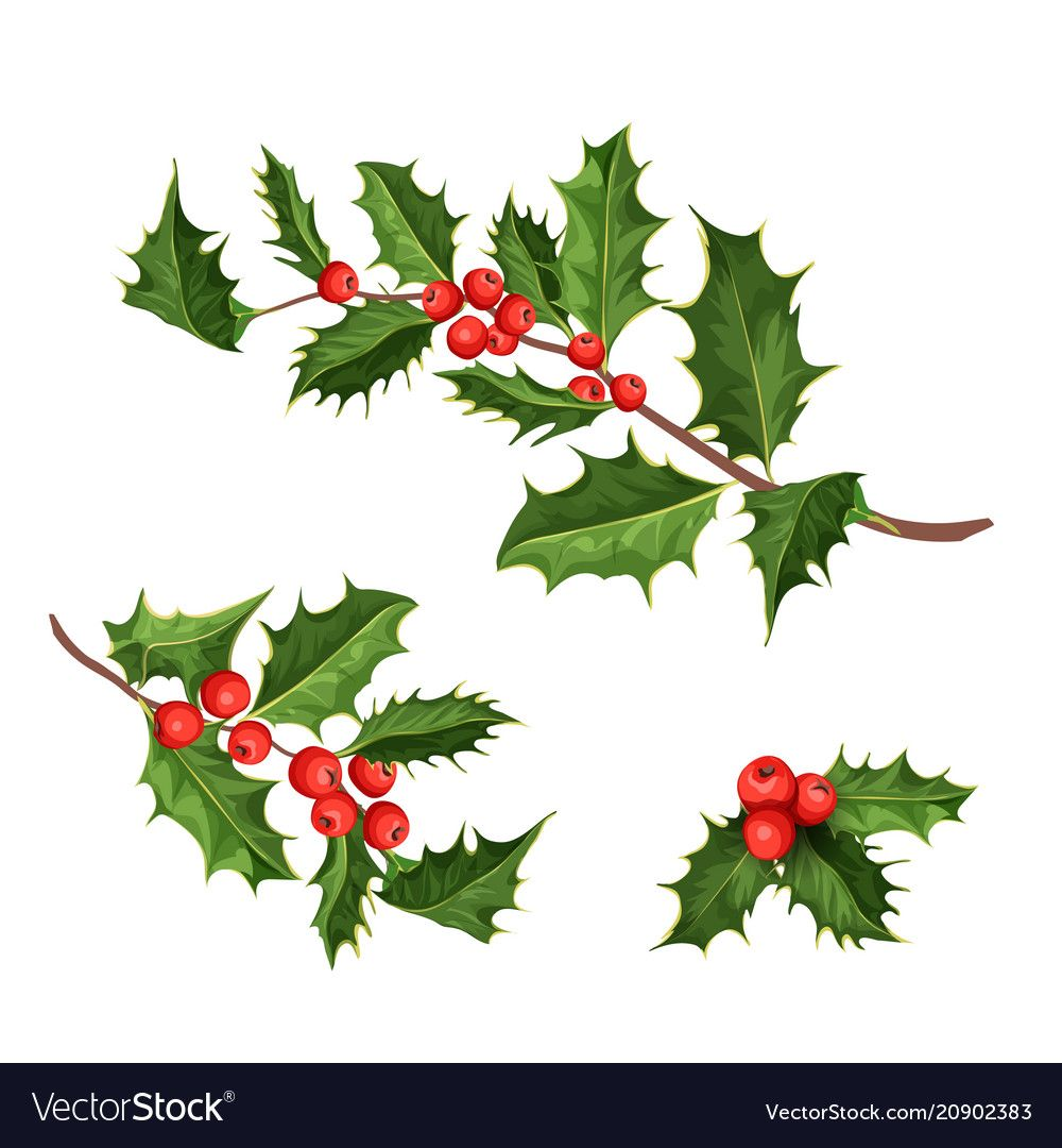 Festive Holly Leaves Set Transparent Png Premium Image By Rawpixel Com Kwanloy Chr Christmas Holly Images Christmas Wallpaper Free Christmas Poster Design