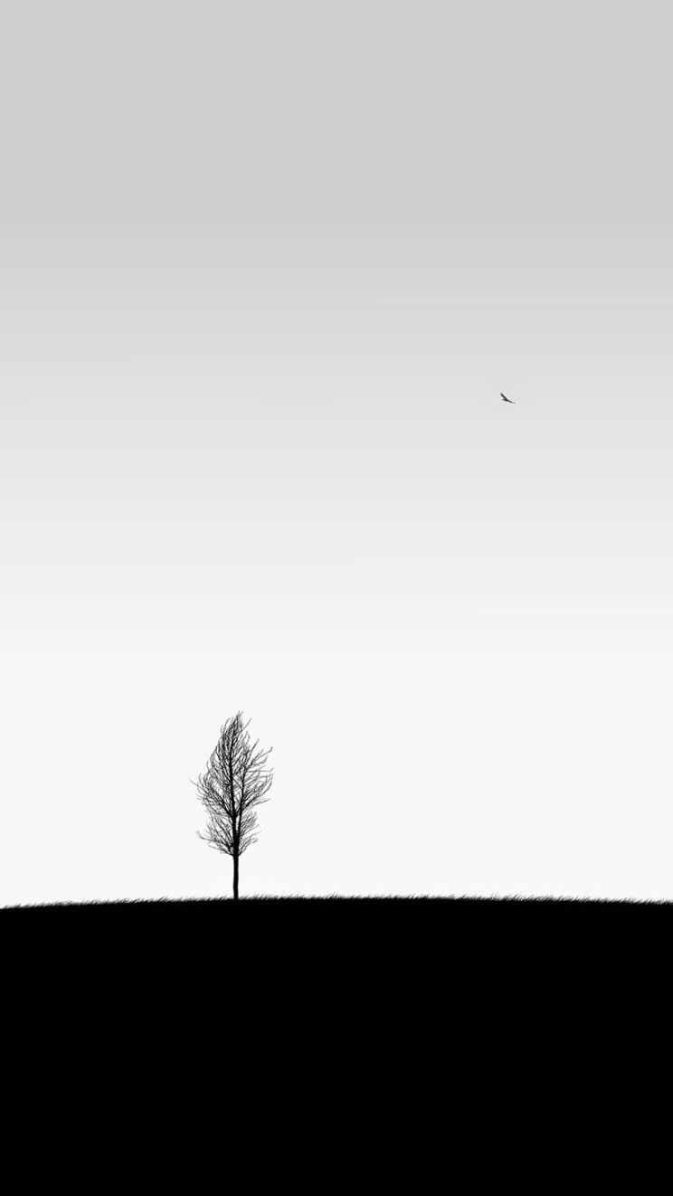 iPhone Tree Art Simple Minimalistic - White Wallpaper ...