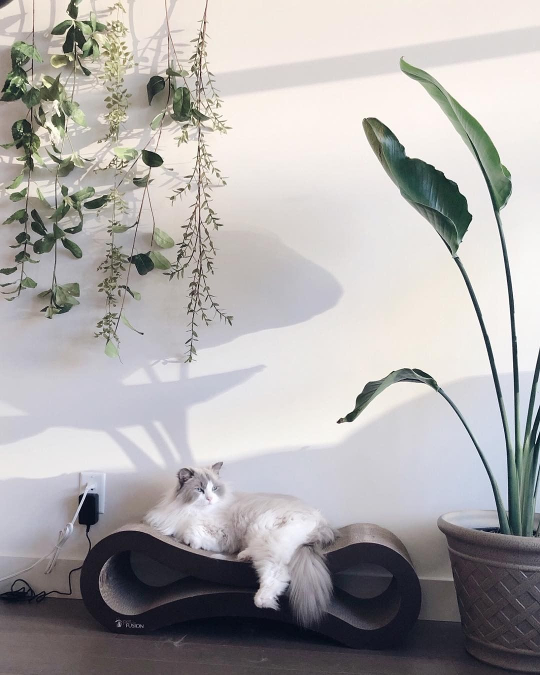 Donut is a handsome, regal prince (and he knows it) 👑 Doesnt he look like purr royalty relaxing on his Ultimate Cat Lounger? 📸: @kitties_in_cities  #kingcat #epiccat #majesticcat #catboss #fluffycat #catlounger #catbed #ragdollcat #ragdollsofinstagram #homedecor #plantsandcats #catsathome #indoorcat #bosskitty #catlife #luxury #urbancat #spoiledcat #plantlife #plantsofinstagram #plantdecor #happyplants #happycats #catlover #plantlover #kittiesincities