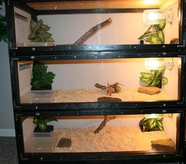 Pin By Guinevere Mee On Reptile Enclosures Reptile Cage Snake