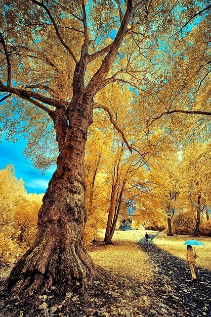 Gorgeous Infrared Landscapes With Trees Of Gold And Silver Landscape Trees Beautiful Nature Nature
