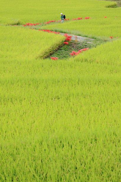 .Green fields