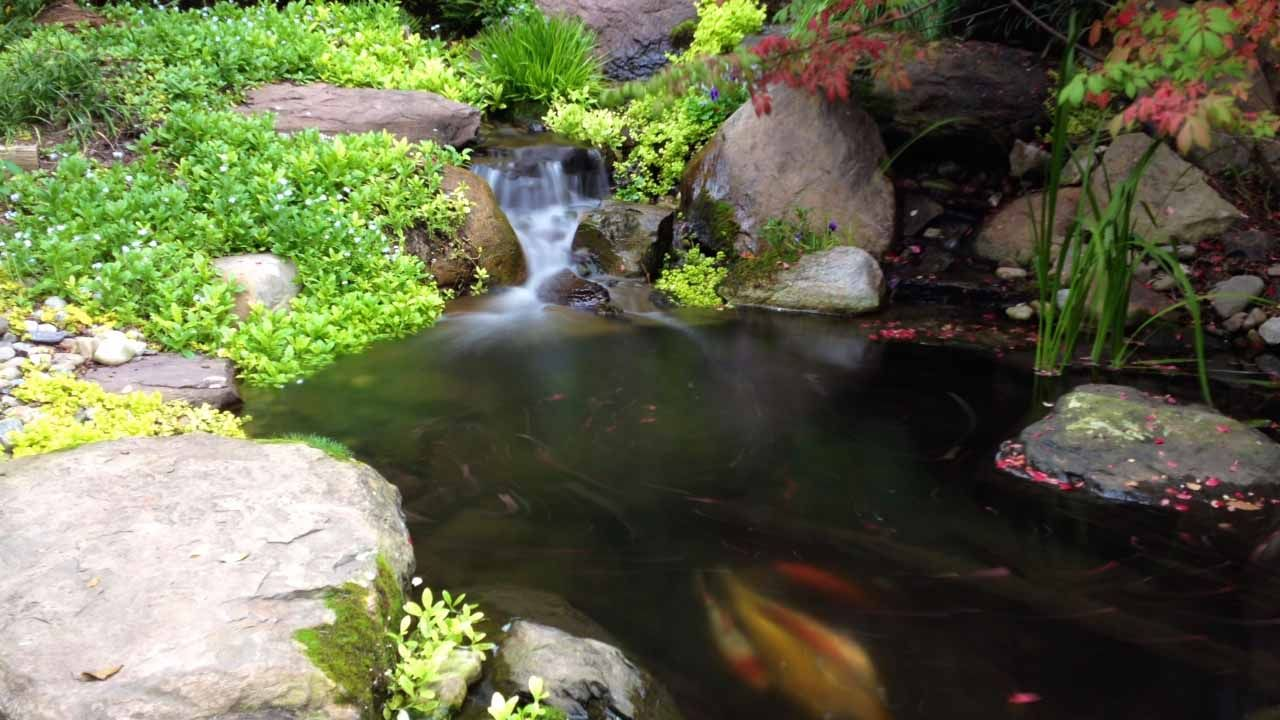 Pond & Waterfall in Baltimore, Maryland (MD) (With images ...