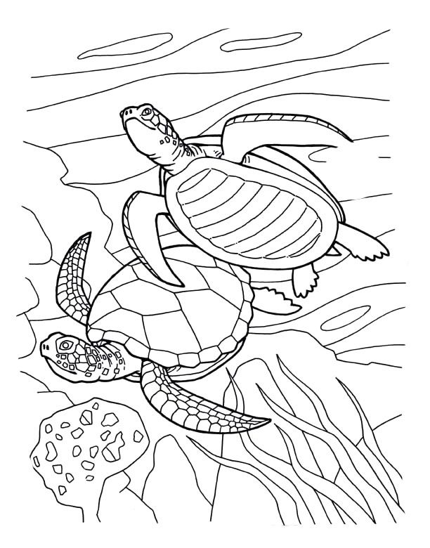 Animals page sea turtle breeds sea turtle eggscoloring page free picture of sea turtle mating coloring page free sea turtle swimming coloring page