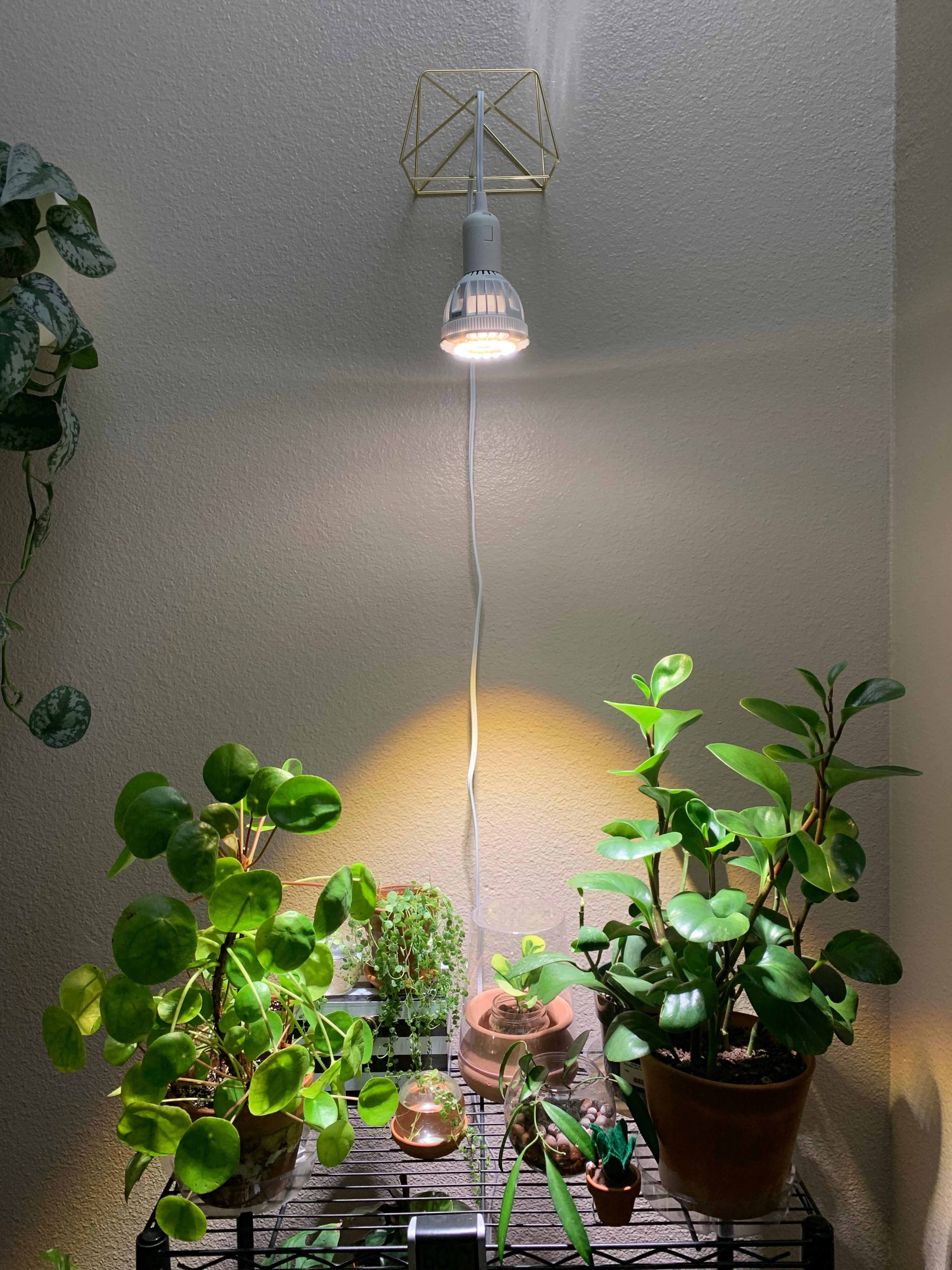 Grow Houseplants Even If You Live In A North Facing Apartment Grow Lights For Plants Indoor Grow Lights Grow Light Bulbs