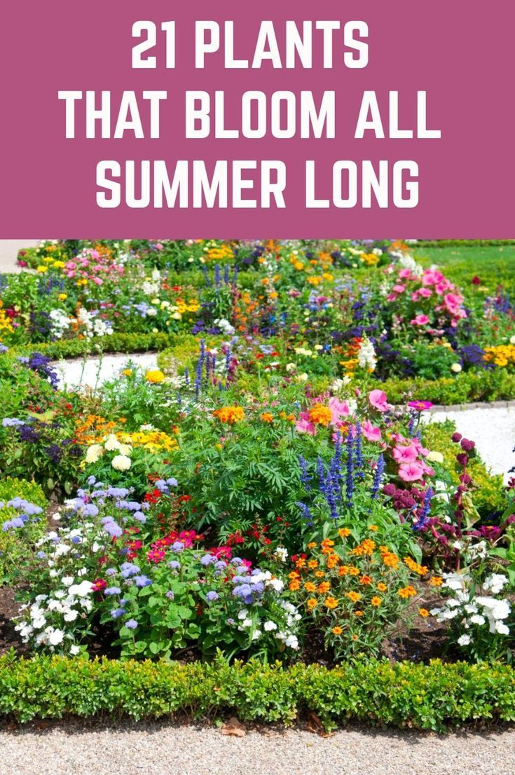 Here is a wide selection of beautiful summer plants which bloom profusely throughout the season without much pampering from you.
