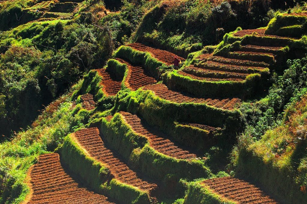 Farming terrace google search terracing pinterest for Terrace cultivation
