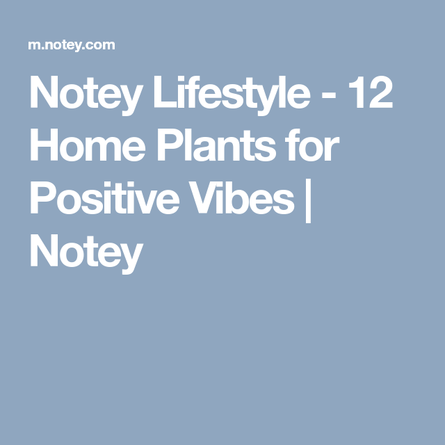 Notey Lifestyle - 12 Home Plants for Positive Vibes | Notey
