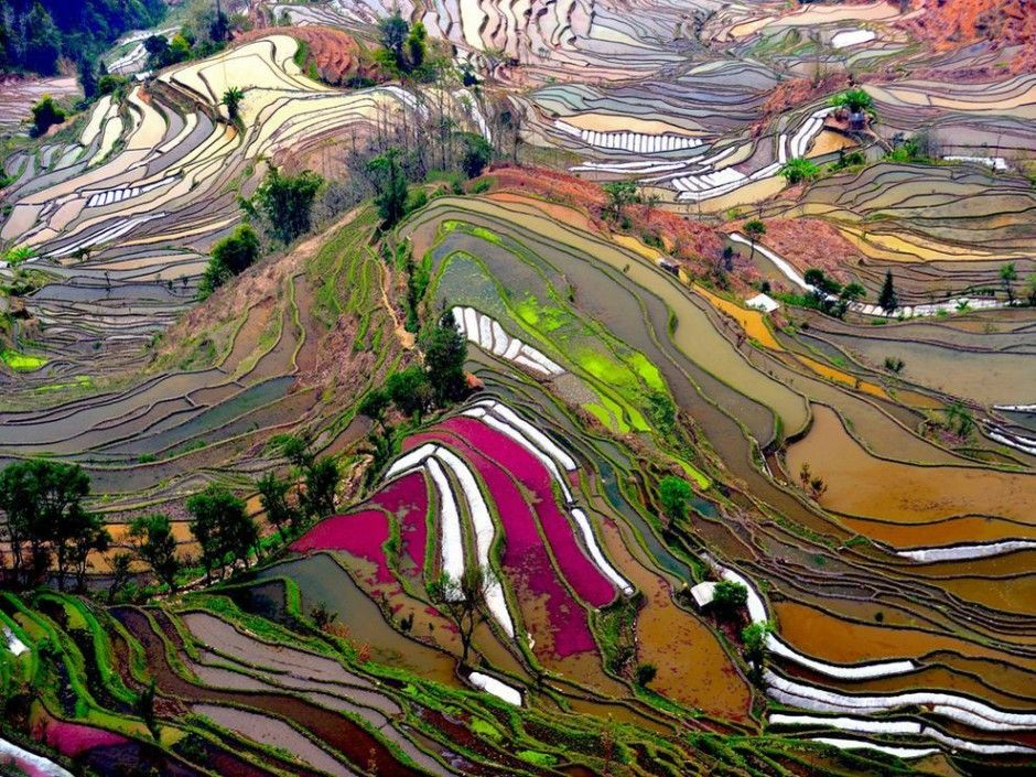 Located in Yuanyang county, Yunnan province, this is one of them. The bright colors here are the result of algae growing on the surface of standing water on some of the terraces.