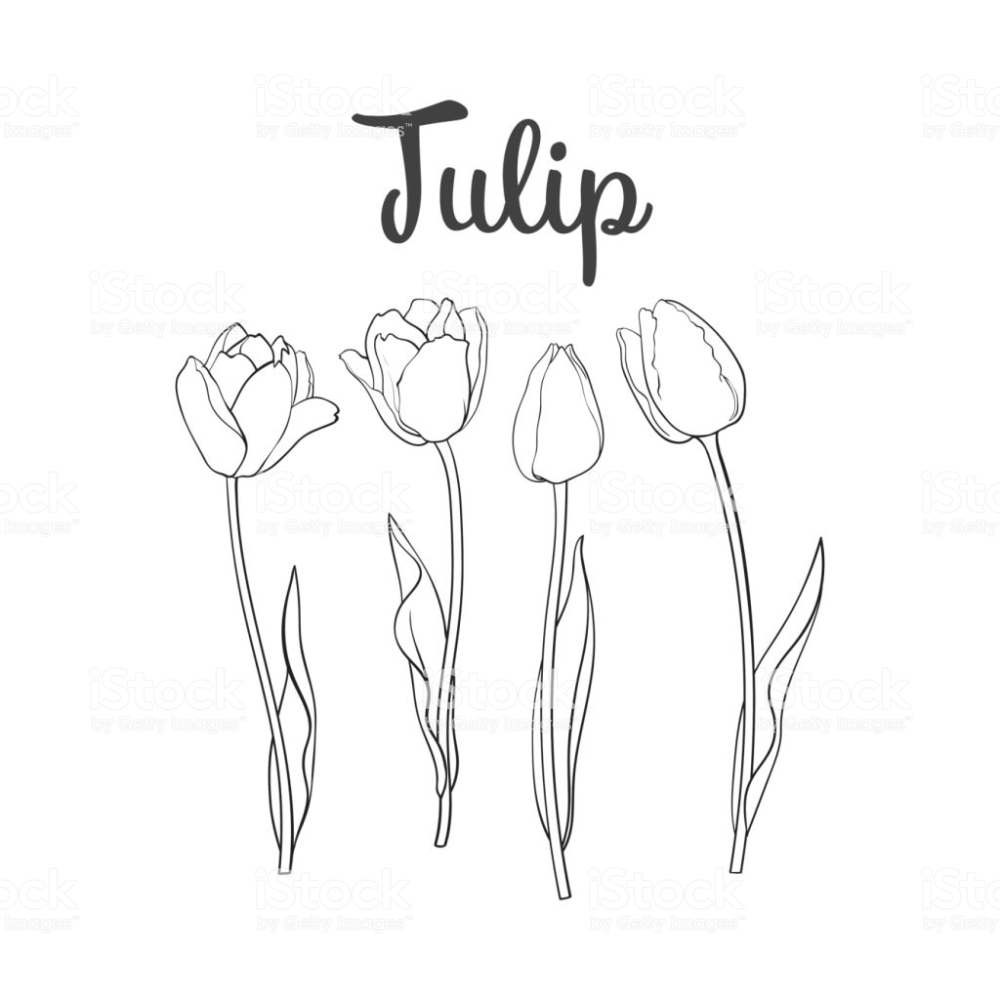 Hand Drawn Set Of Side View Black And White Open And Closed Tulip Tulip Drawing Tulips How To Draw Hands