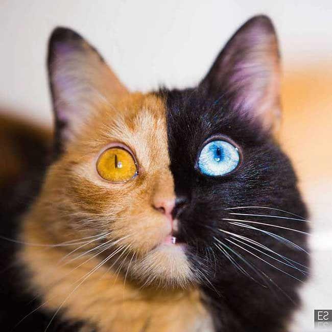 quimera chat chimere instagram