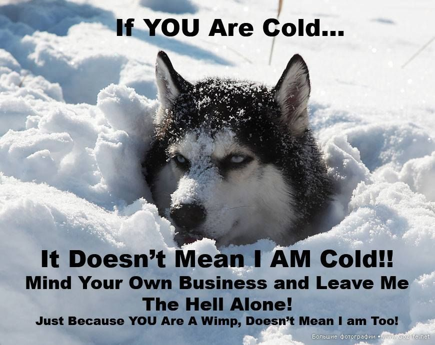 This Is The Truth About Huskies They Love The Cold Weather No