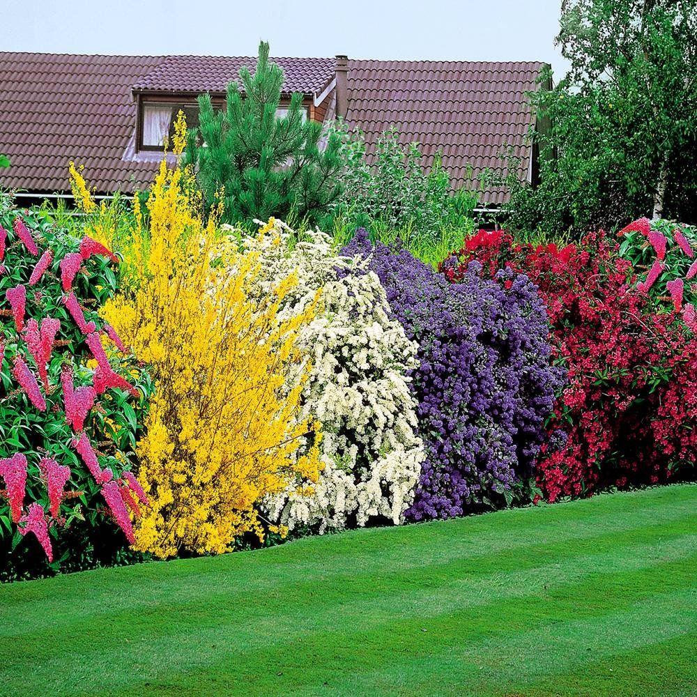 Blühende Hecke 5 heckenpflanzen Garten Ideen