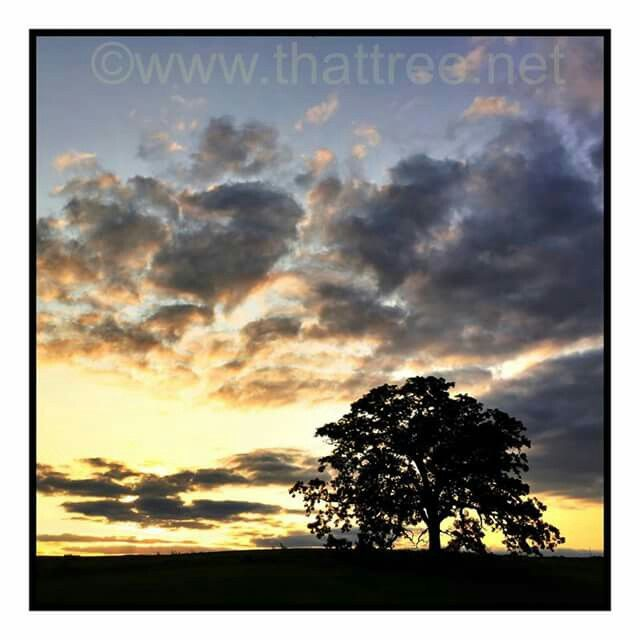 Sunset that tree series