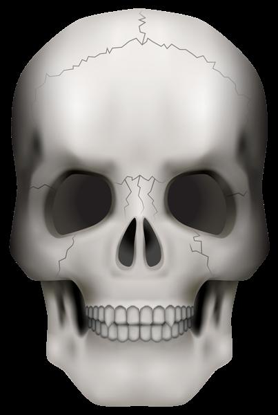 Skull Png Clipart Image Cartoon Clip Art Free Clip Art Halloween Scrapbook