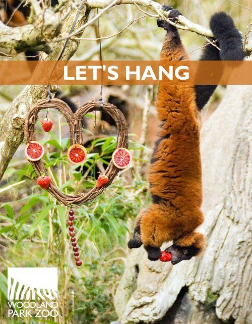 Valentines Day Celebration Woodland Park Zoo Seattle Wa Woodland Park Zoo Cute Wild Animals Animal Valentine