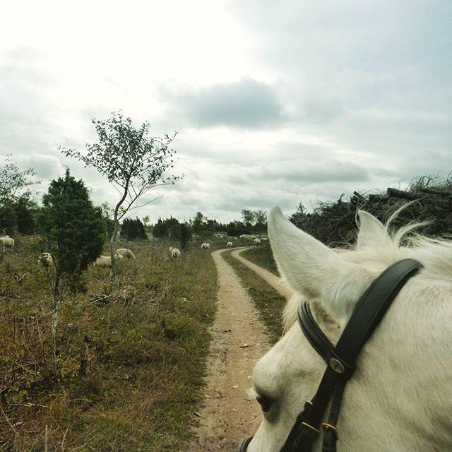 Arabermixstute Martsu und ich unterwegs in Estland! Mein neuer Blog Beitrag dazu ist online 🌸🌸🐴🐴🐴🐴🐴🐴🐴 (Link steht auf meiner Profilseite) #reiten #ausreiten #estland #Estonia #pferde #araber #galopp # Ostsee #galoppieren