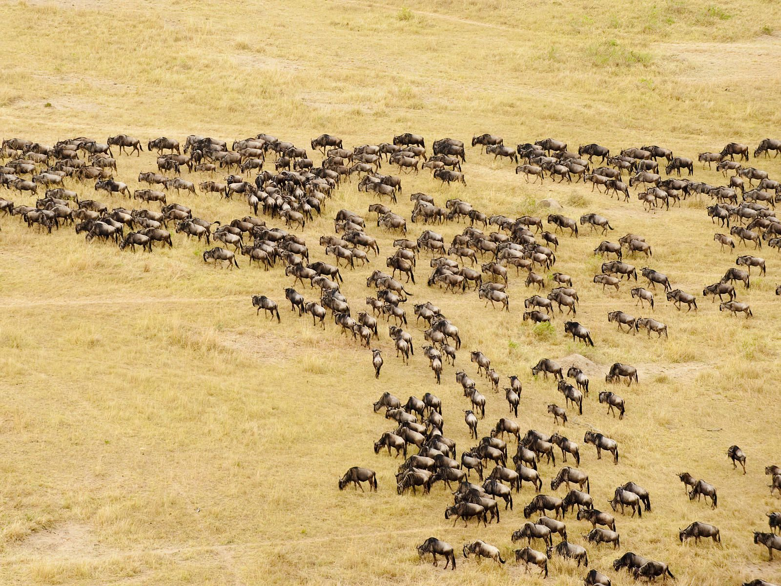 Budgettravel The Maasai Mara Africa adventure, Kenya