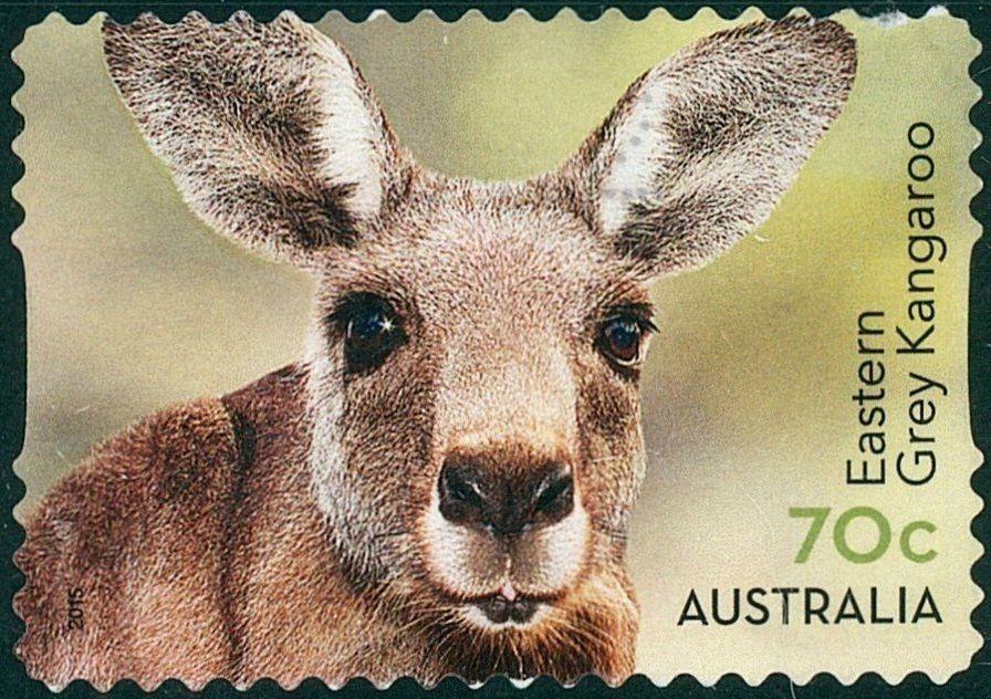 Stamp: Eastern Grey Kangaroo (Macropus giganteus ...