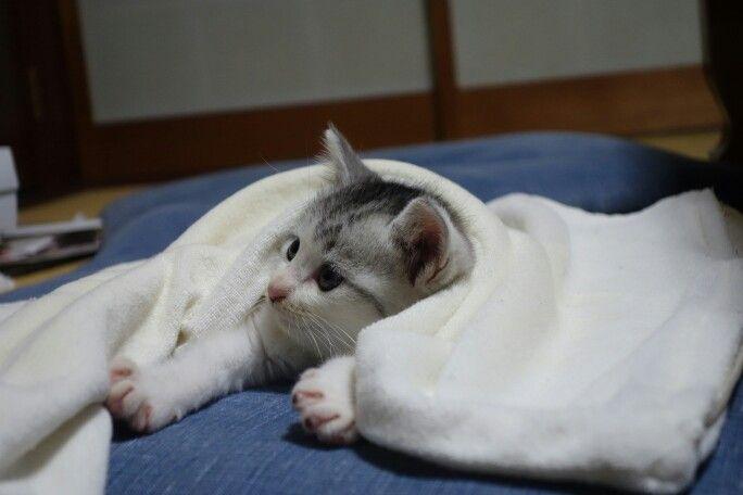 保育園の敷地内で鳴いていた子猫。一匹だけだったので連れて帰ってきた。