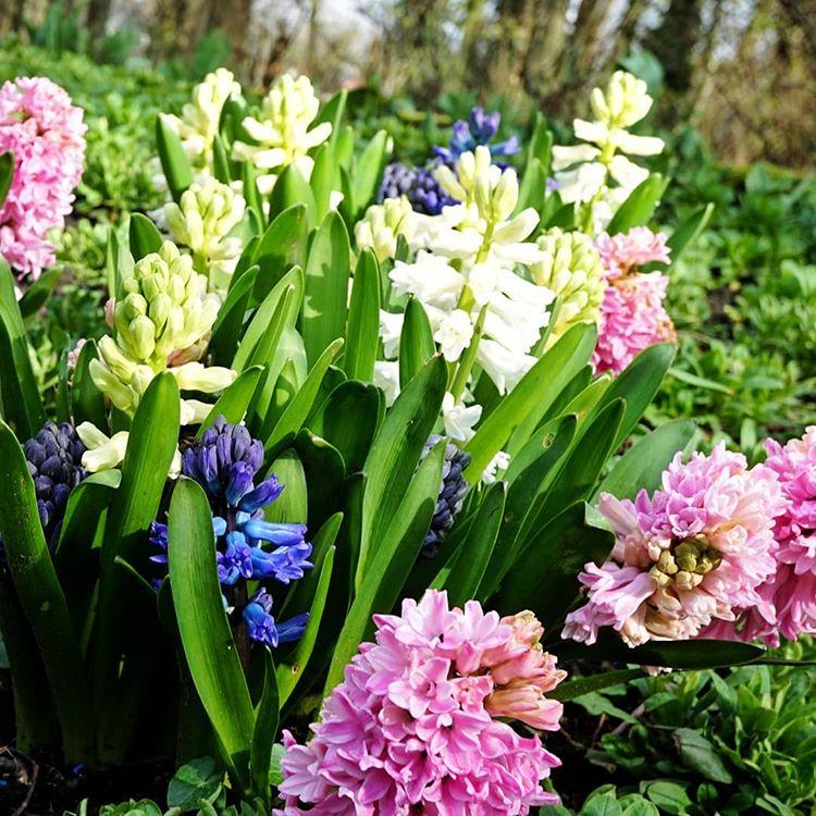 Ada Pardo Adorosapl Instagram Photos And Videos Nie Ma Wychodzenia To Jest Chociaz Pierwszy Dzien Wiosny Na Zdjeciach Dawne Jare Swieto Robi Plants