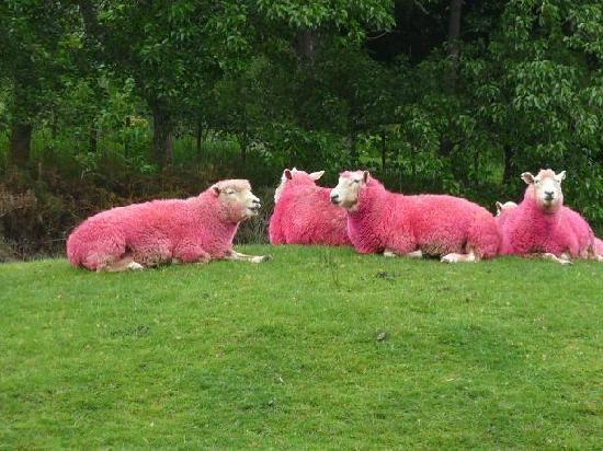 Sheep Sheep Worlf