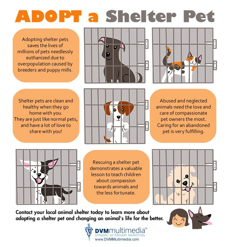 Cara Welfare Philippines Blog Archive Why Adopt A Pet Pet Clinic Animal Shelter Animal Shelter Adoption