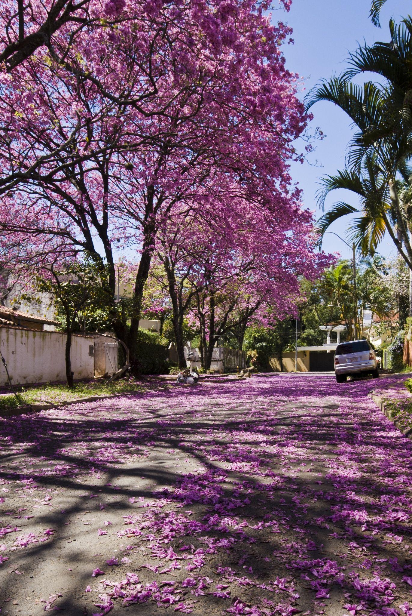 Lapachos Lane Cool Places To Visit Places To Visit Paraguay