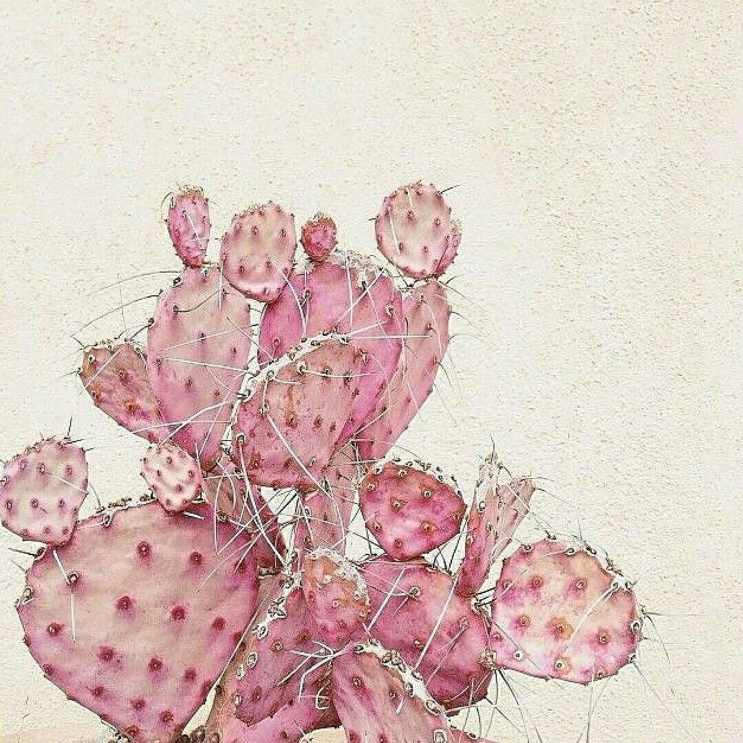 Pink Cactus Cactus Drawing Flower Bomb Mexican Art