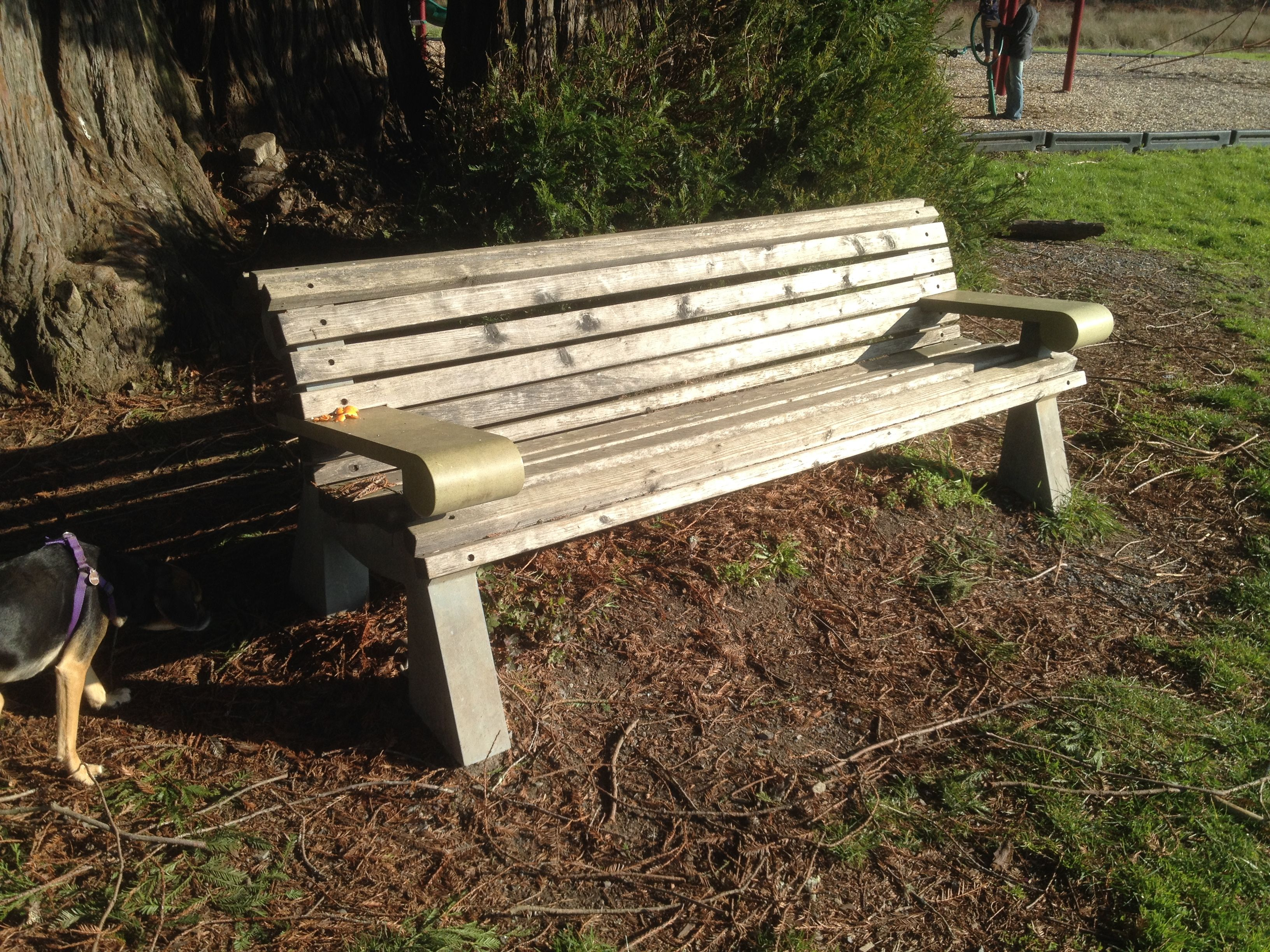 redwood bench with cement legs/arms, Salmon Creek School. Very ...
