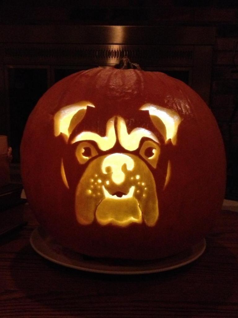 english bulldog news forums winners of our pumpkin carving rh pinterest com