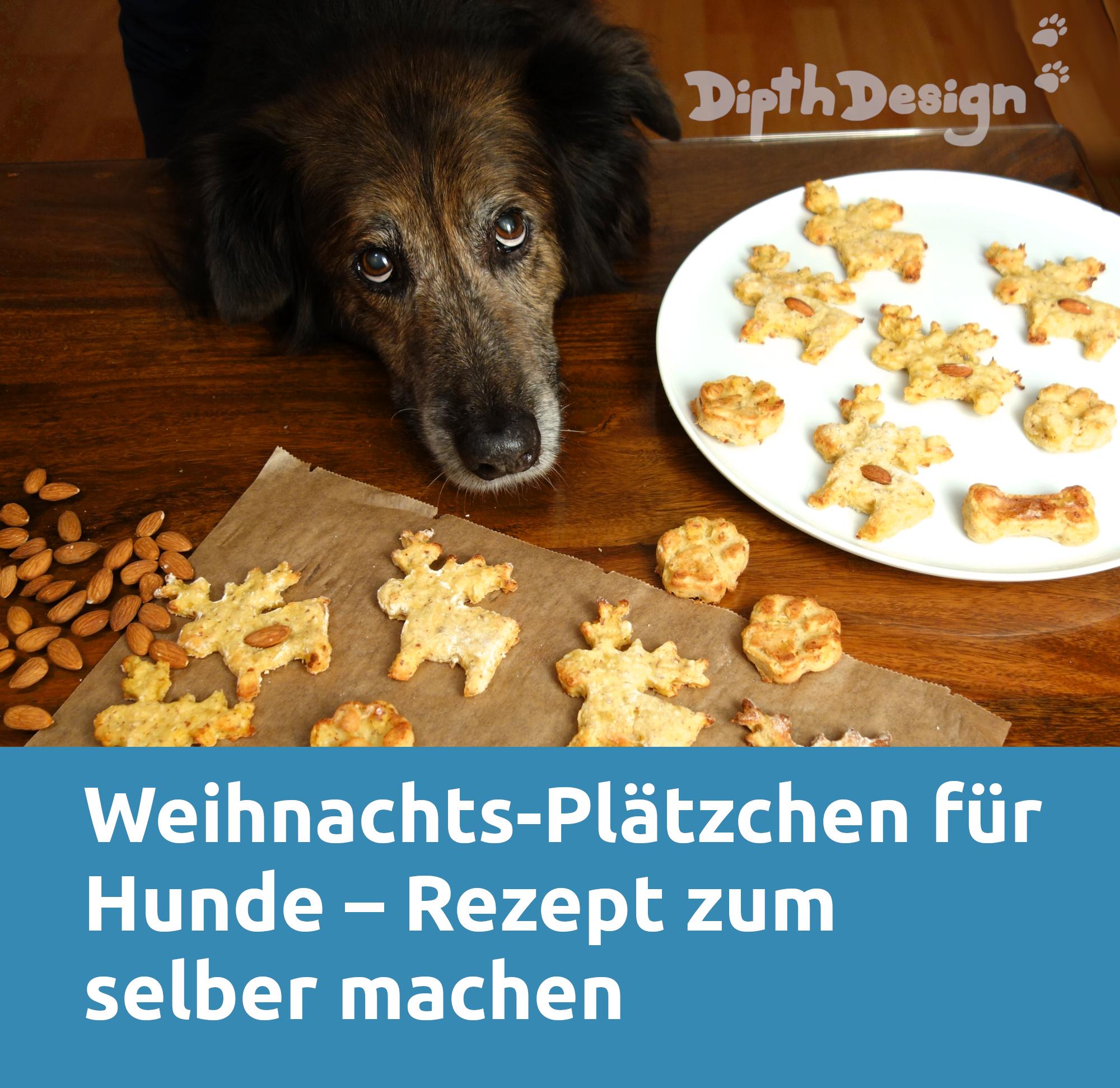 Pin Auf Dipthdesign Hundeblog