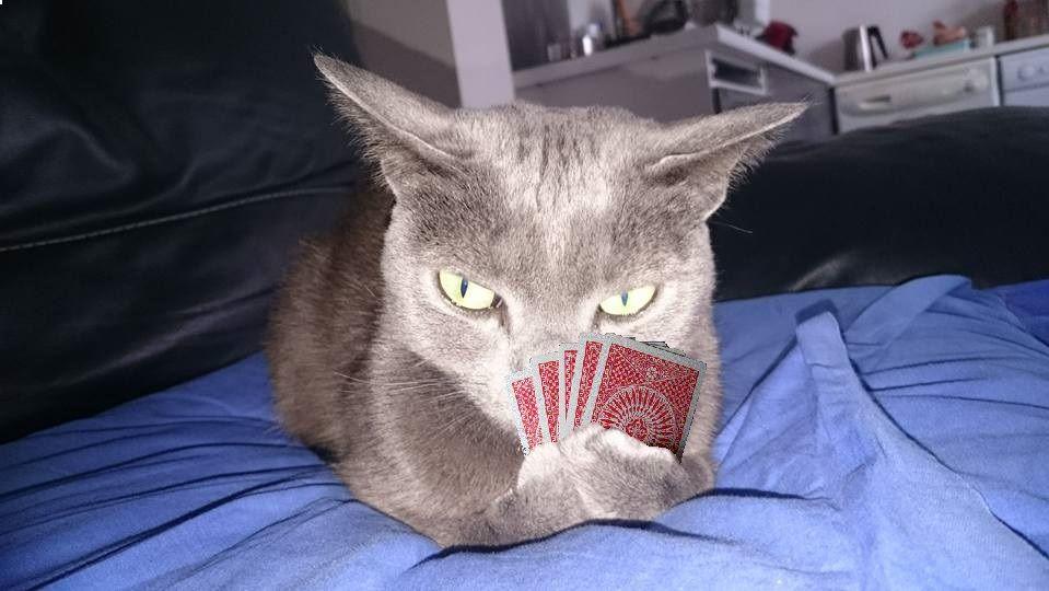 Poker-cat