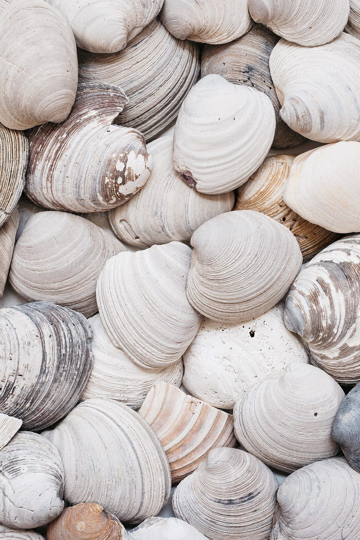 Overhead Image Of Rustic Clam Shells Download This High Resolution Stock Photo By Kelly Knox From Stocksy United Shells Photo Wall Collage Beach Aesthetic
