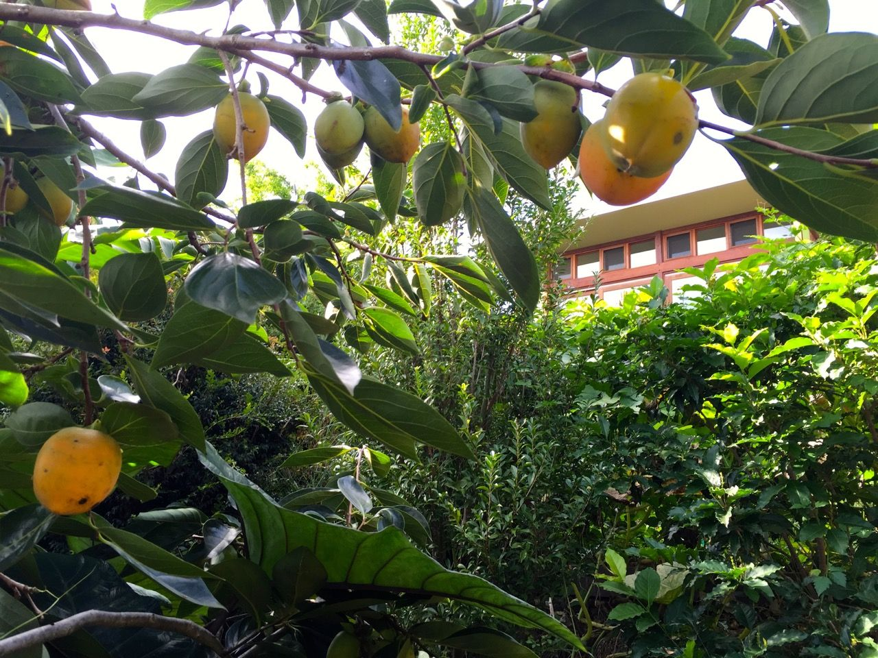 happy earth 201520 trädgård permaculture pinterest happy earth