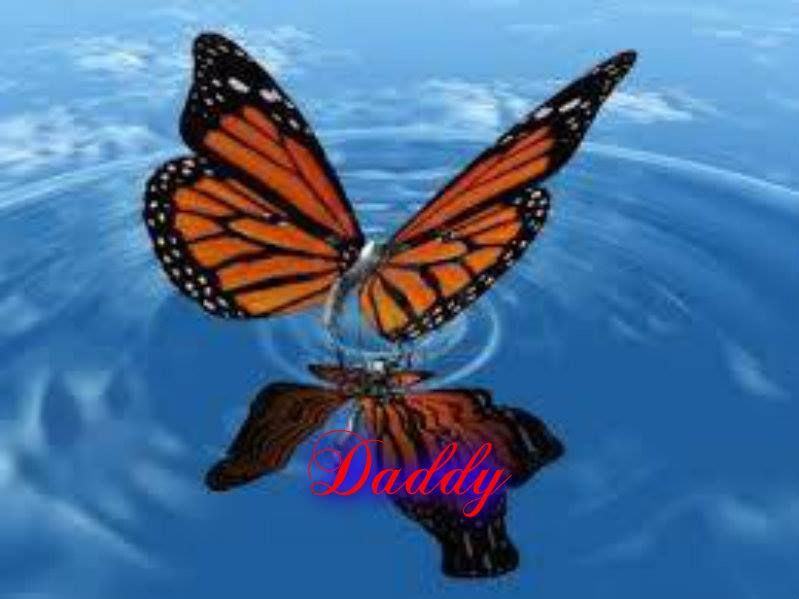 Yellow Butterfly~Daddy