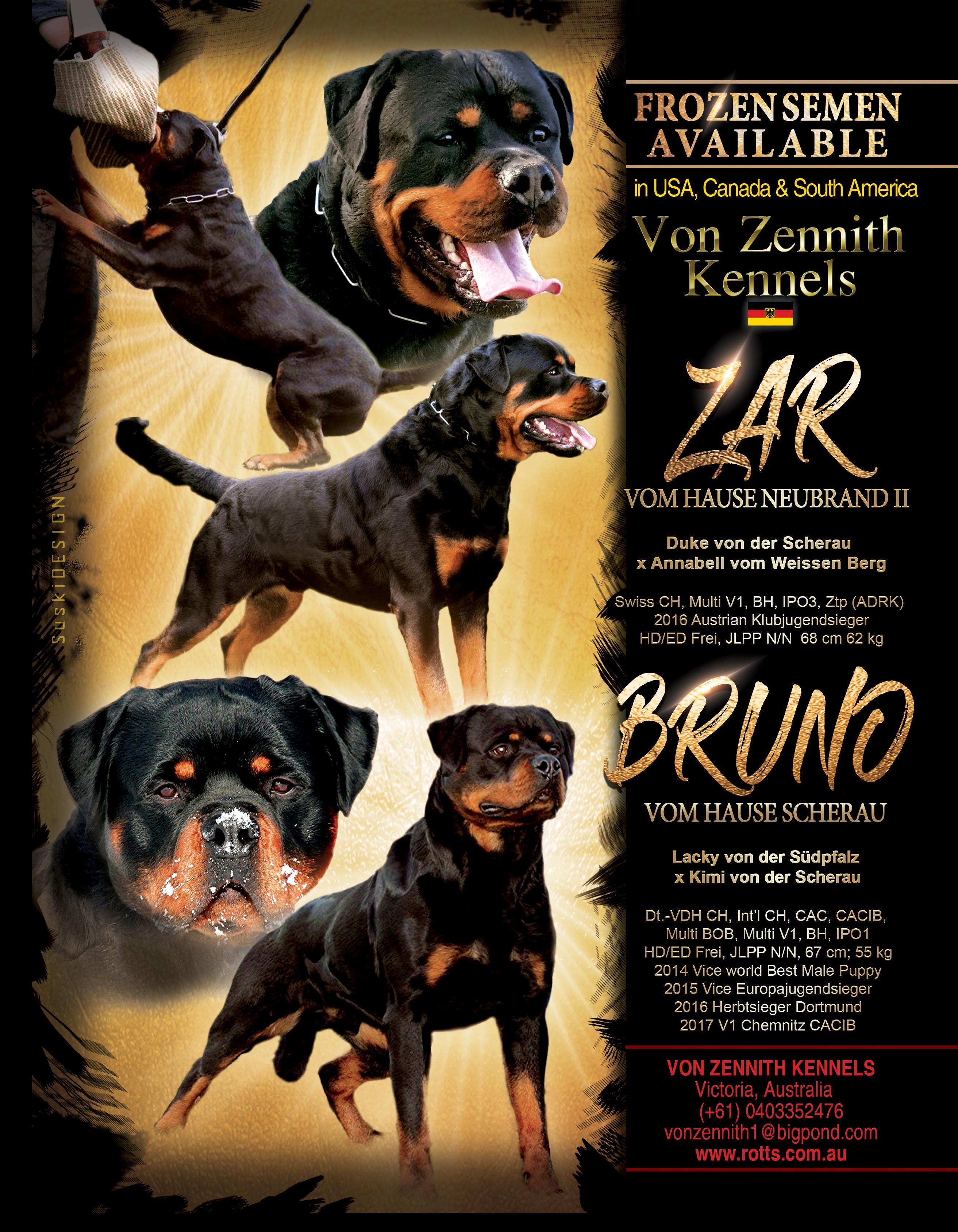Von Zennith Rottweilers Victoria Australia 61 0403352476