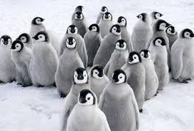 내셔널지오그래픽 남극에 대한 이미지 검색결과