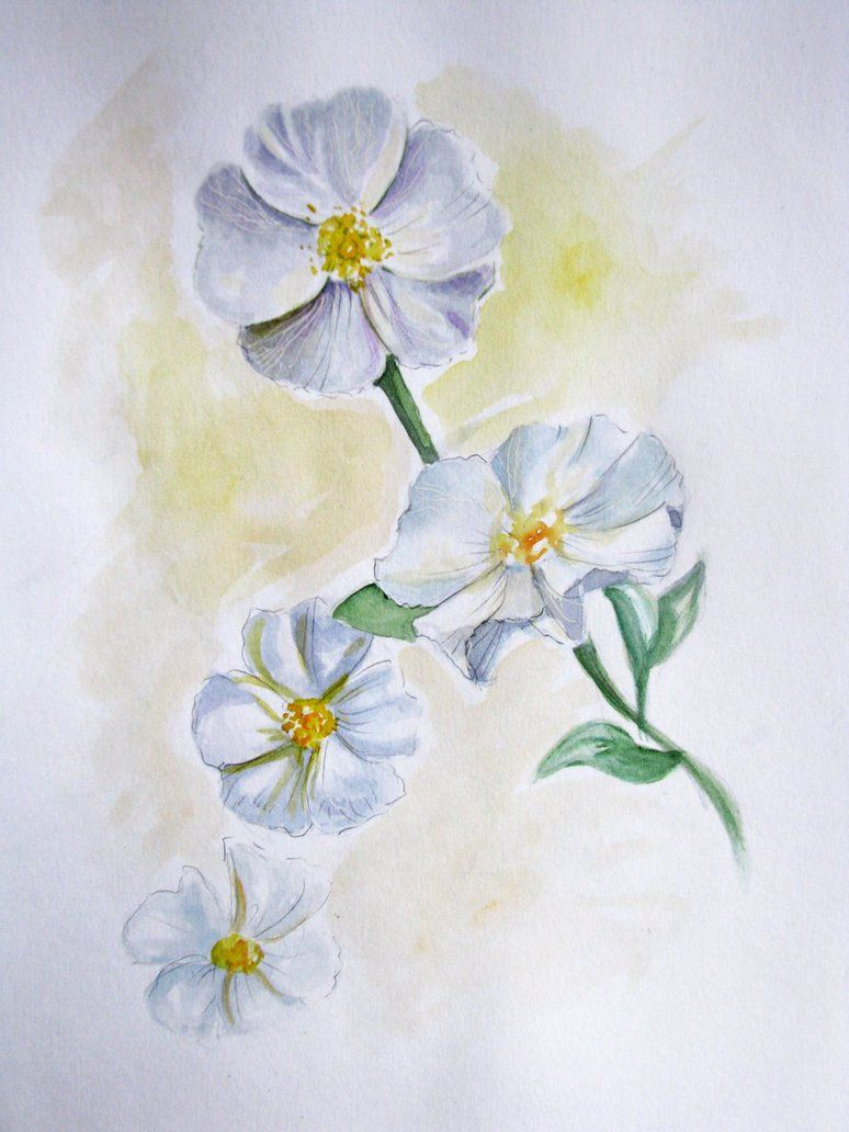 c3a8b57bf Image result for Cherokee Rose drawings | Tattoos | Rose tattoos ...