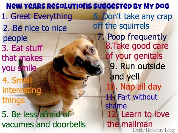 12 New Years Resolutions Suggested By My Dog And A Humorous Look At The Top Ten Resolutions Hilarious New Years Resolution Dogs Dog Quotes