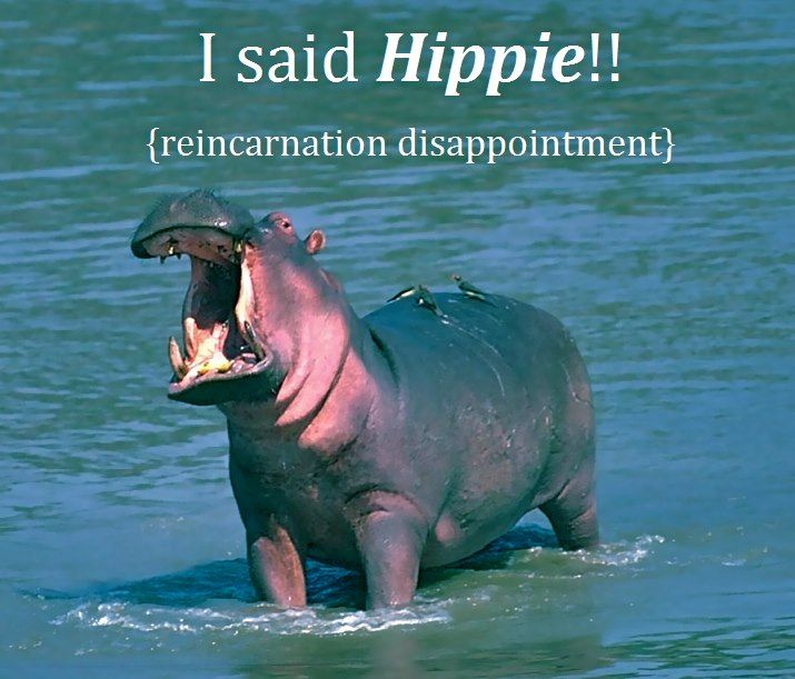 5bd544aefaa8 I said HIPPIE!!! (reincarnation disappointment) | Funny - Love to ...