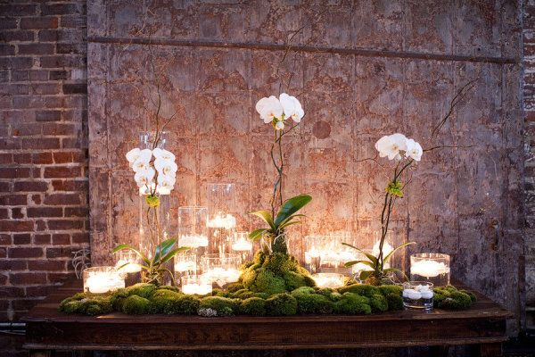 Orchids and Candles in the Walkway - maybe put succulents and the escort cards on the moss?