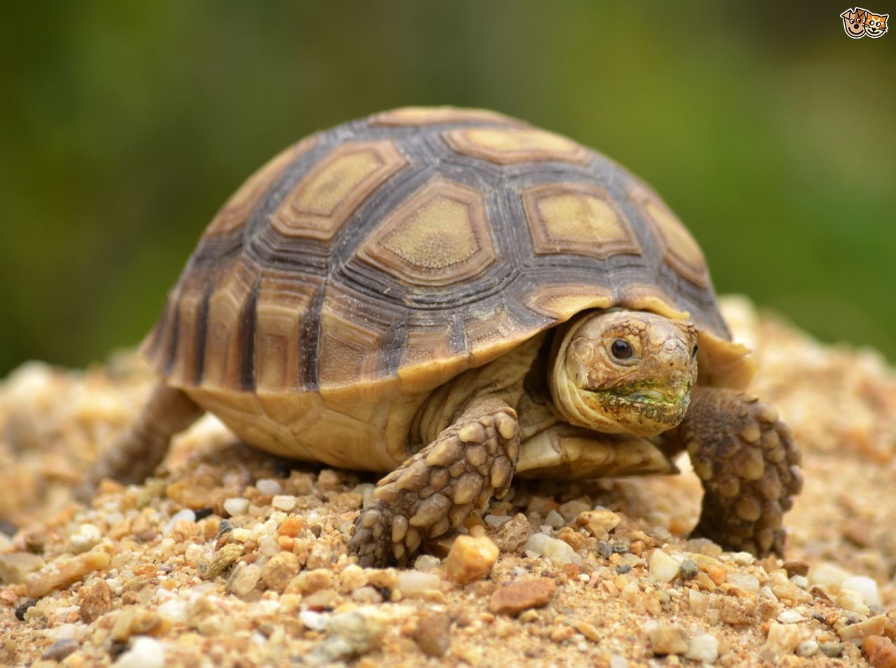 Tortoise and turtle shells, and potential problems