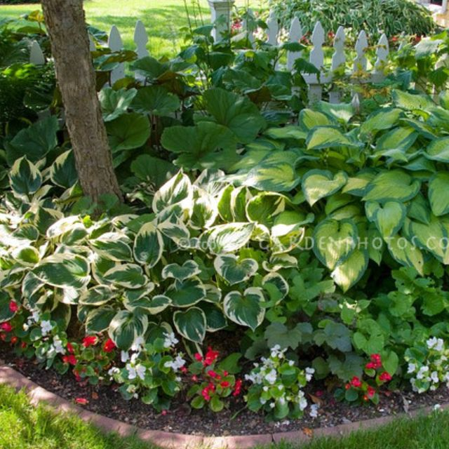 Detail Of One Man Boulder Edging For Raised Beds: Shade Bed - Hostas, Caladiums, Begonias