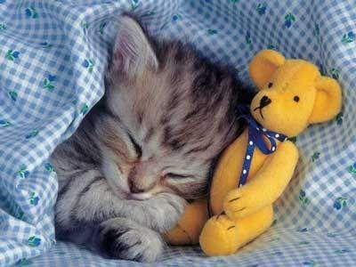 Kitty Cuteness » Everybody needs a friend!