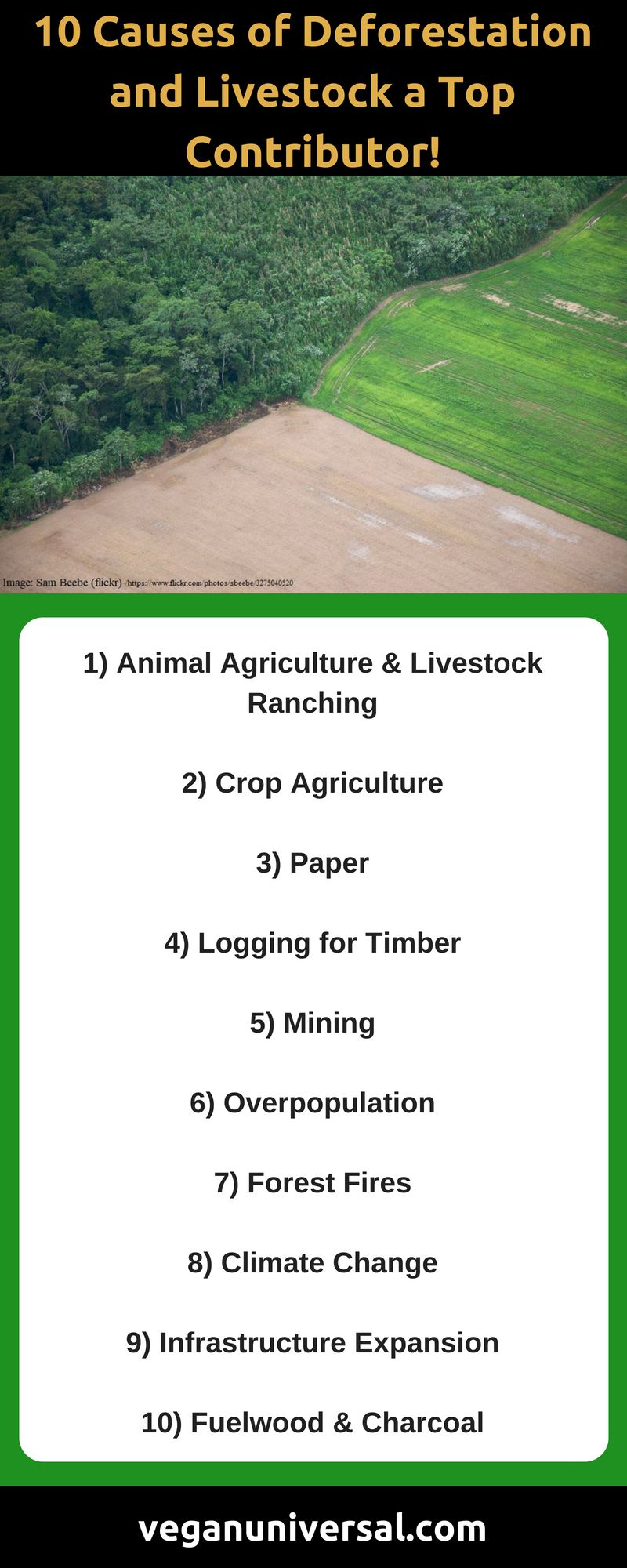 Top 10 Causes Of Deforestation And Livestock The Biggest