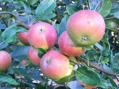 Tips and tricks for Autumn gardening http://outdoorsy.gardenxl.com/2013/10/11/gardening-tips-for-october/